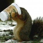 Twitchy the Coffee Addicted Squirrel