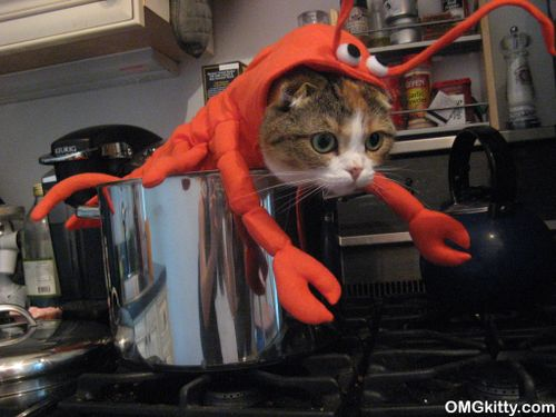 Cat Lobster In A Pot