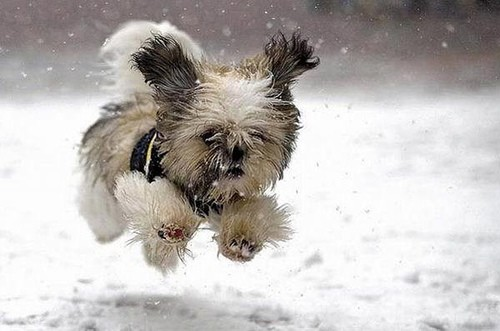 Dog: Cold Feed. Cold Feet. Cold Feet.