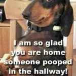 So glad you're home, someone pooped in the hallway.