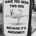 Have you seen this dog? Because it's awesome.