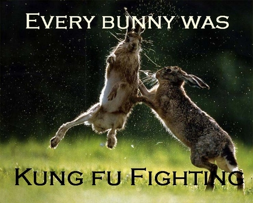 Every bunny was kung f...