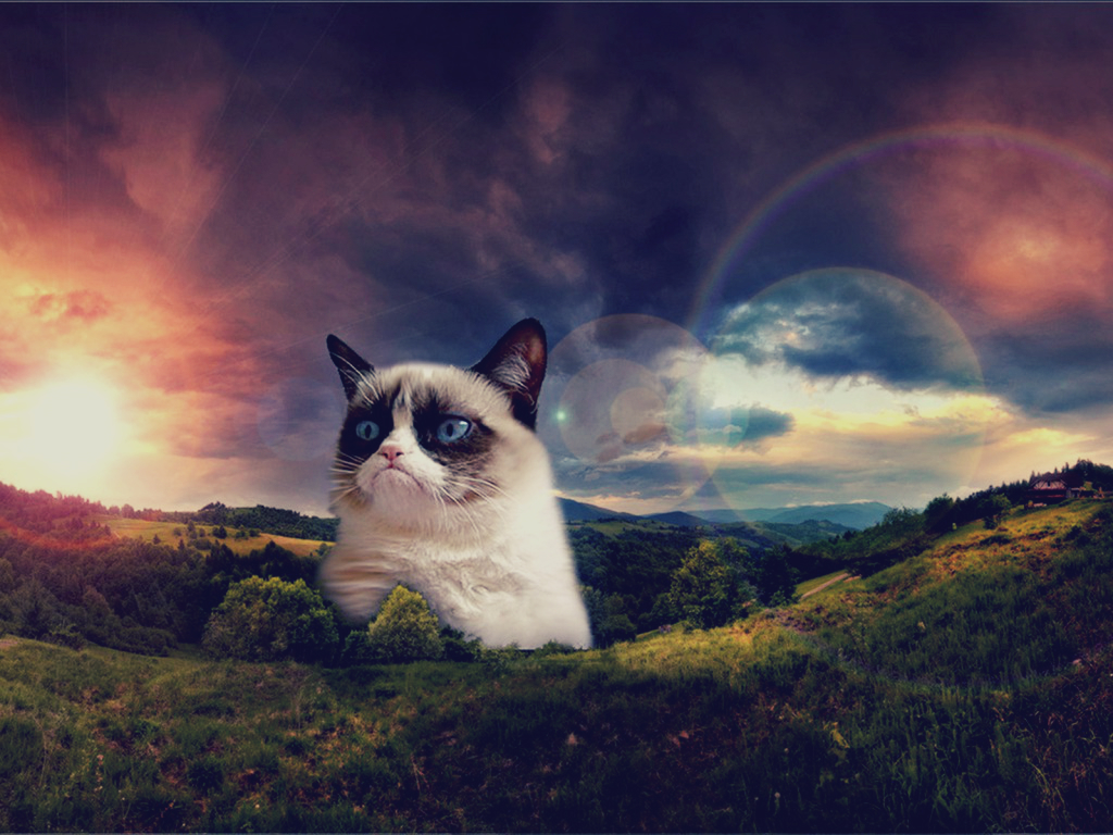 christmas grumpy cat wallpaper images pictures becuo