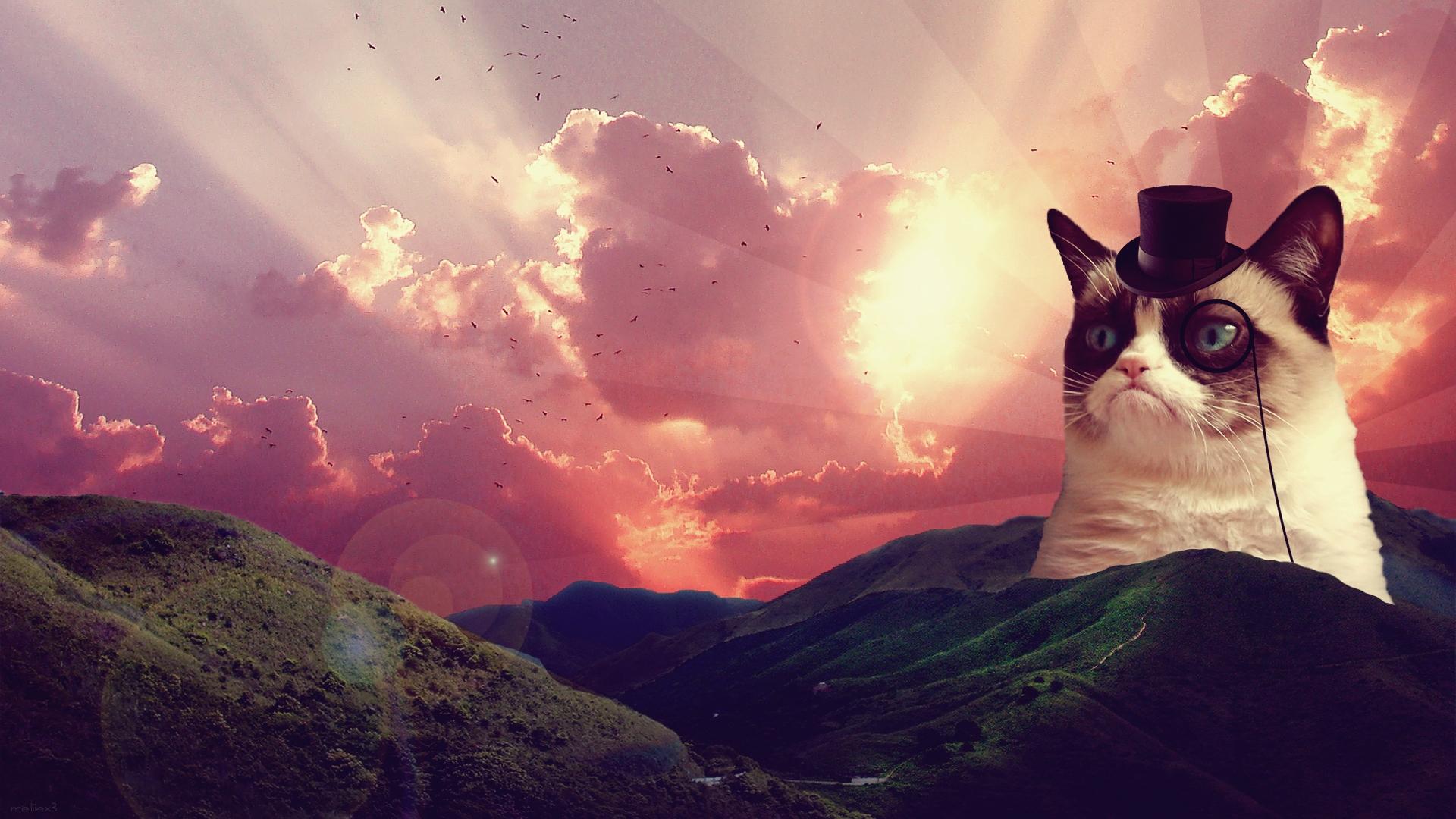 Fancy Grumpy Cat Wallpaper