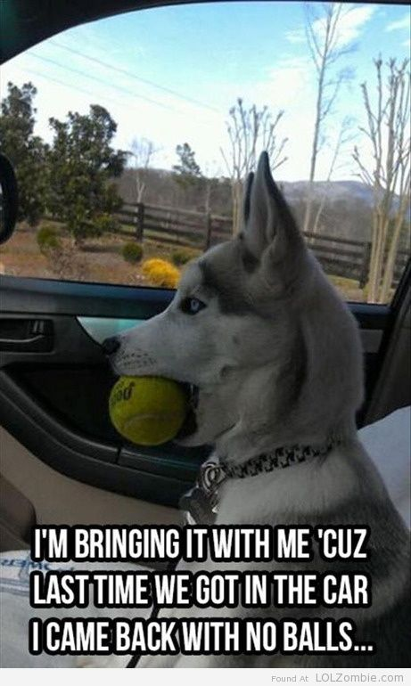 Went for a car ride, lost my balls.