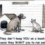 Why don't they put cats on a leash? Because owners want them to run away.