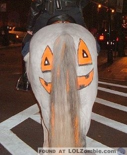 Google Solar Map >> 15 Great Halloween Costumes for Horses