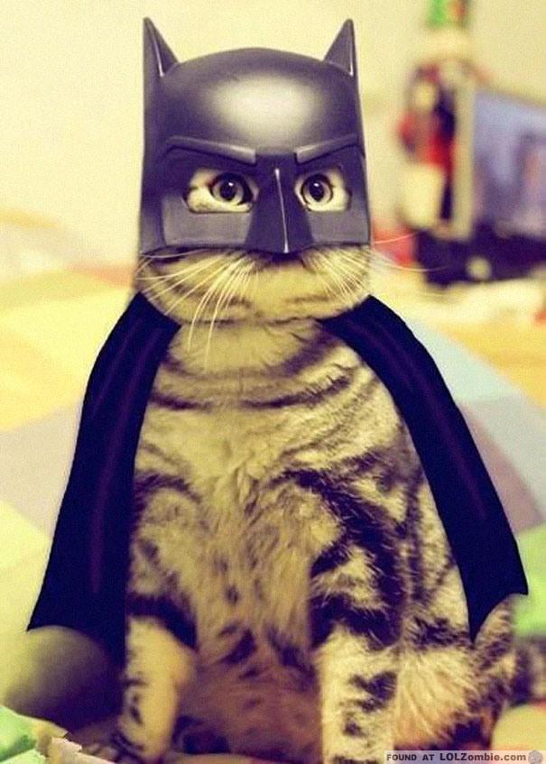 Crazy Cat Halloween Costumes